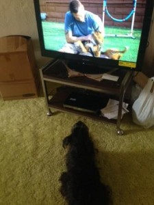 Lucky Dog viewing